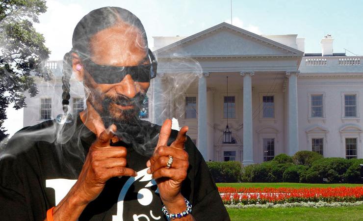 Snoopweed