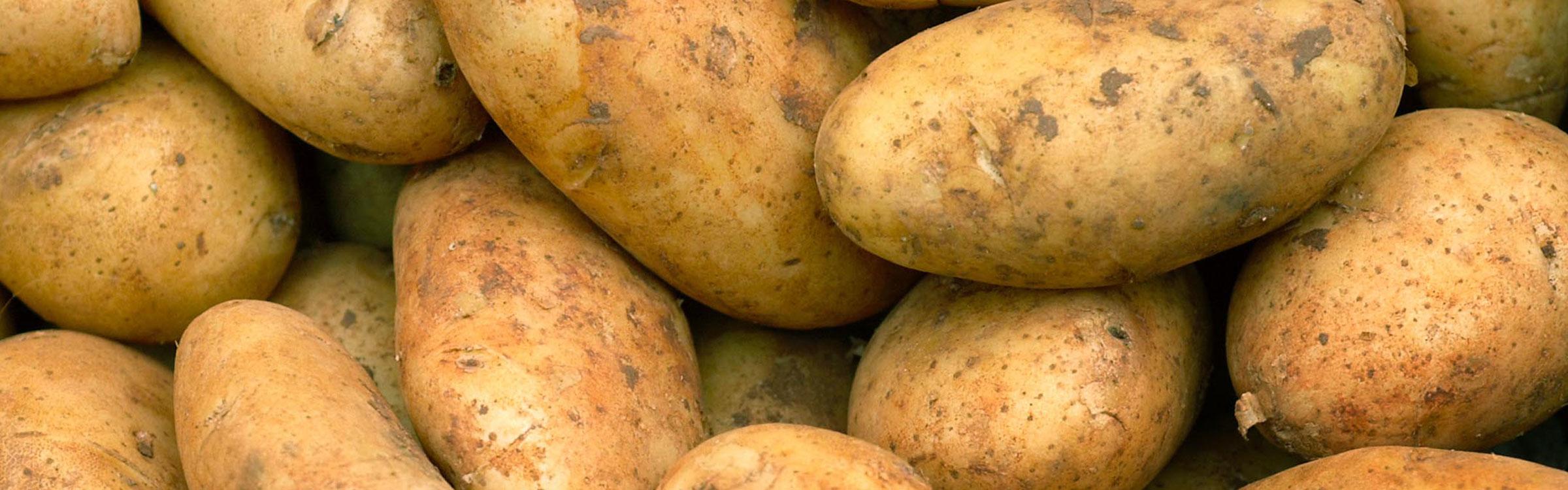 4 nl aardappel  1