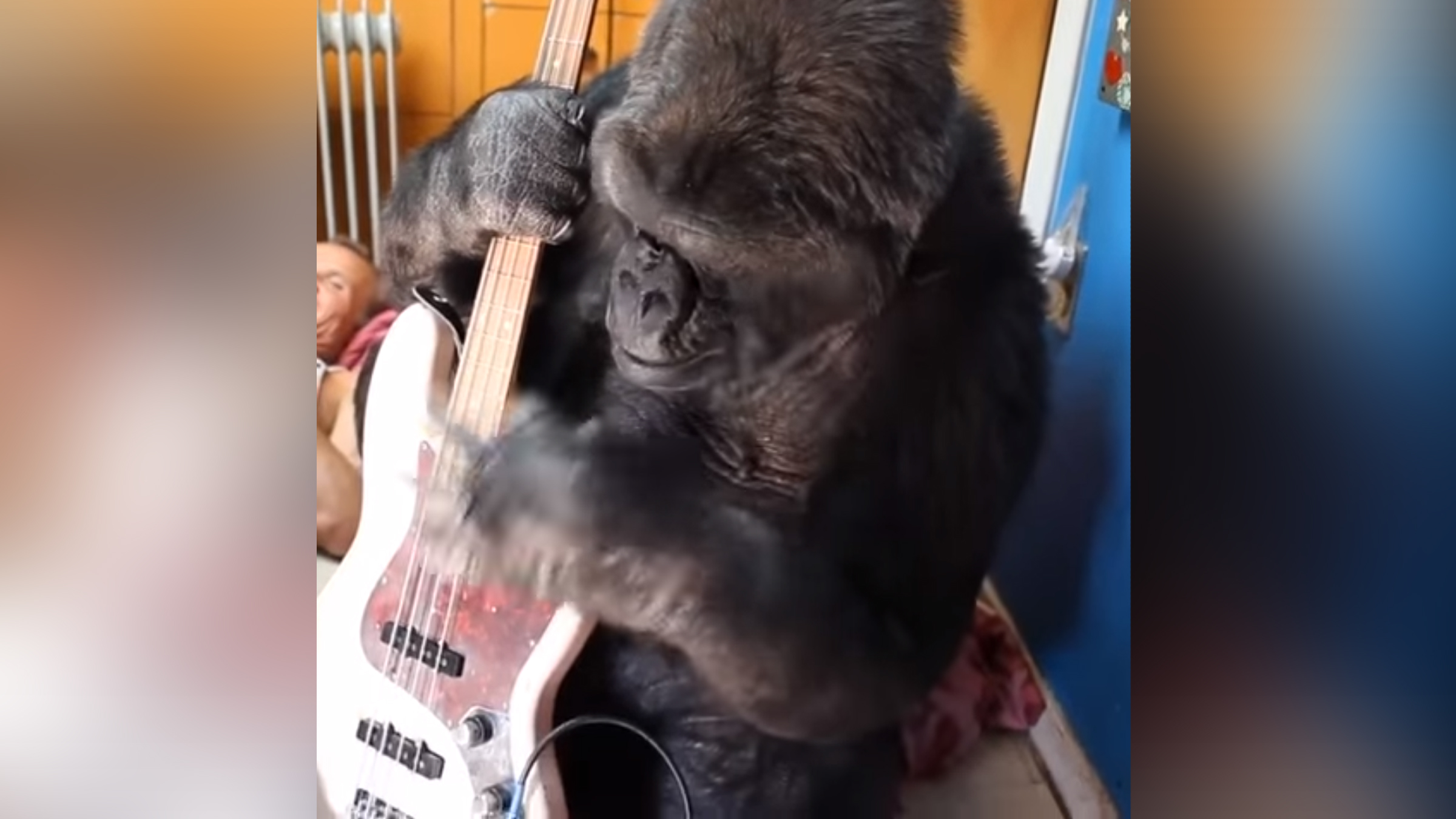 Gorilla peppers teaser