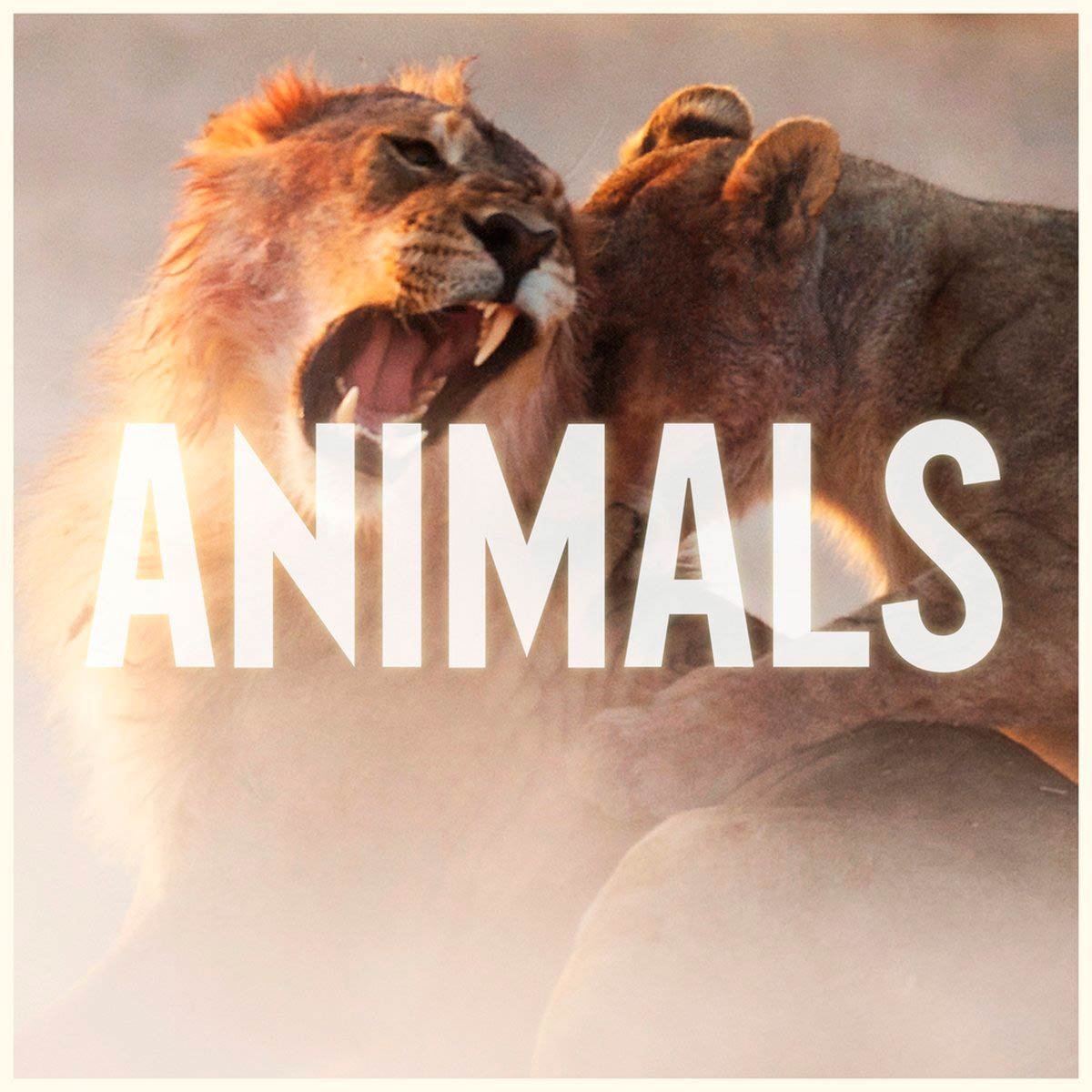 Maroon 5 animals portada