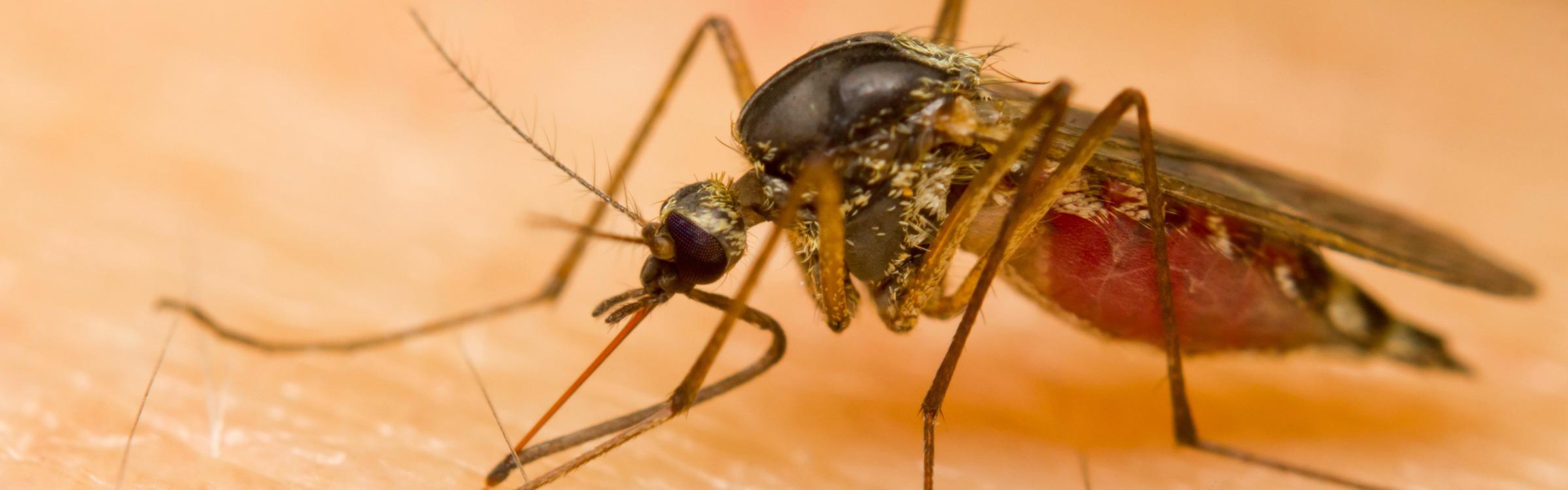 Muggenplaag2
