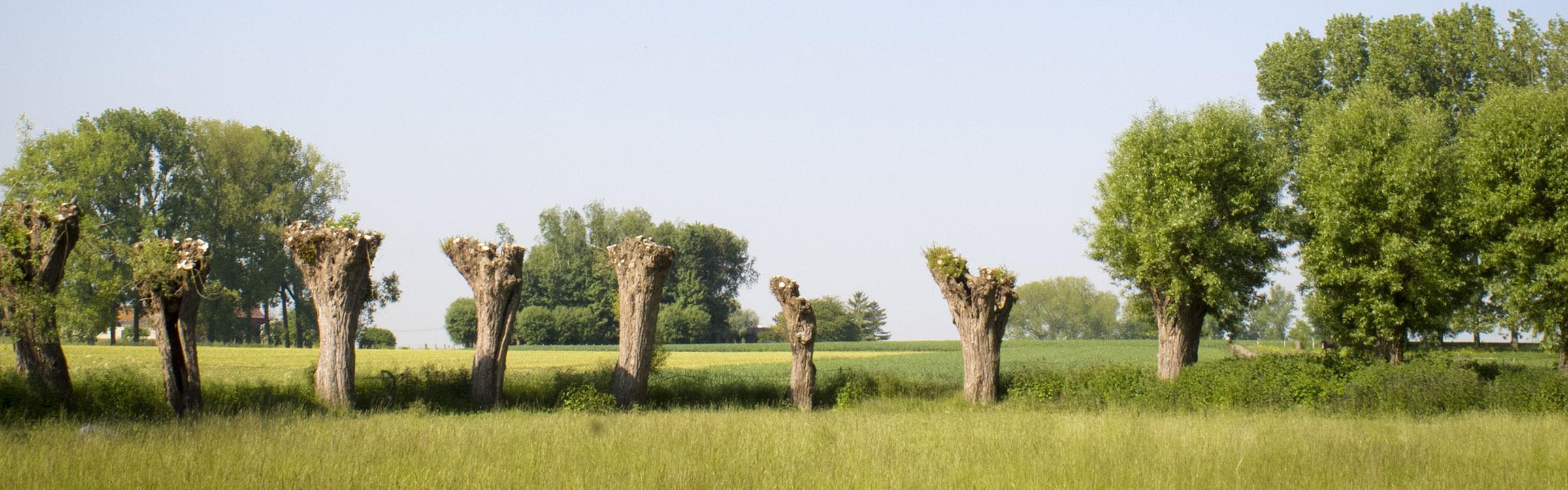 Platteland algemeen