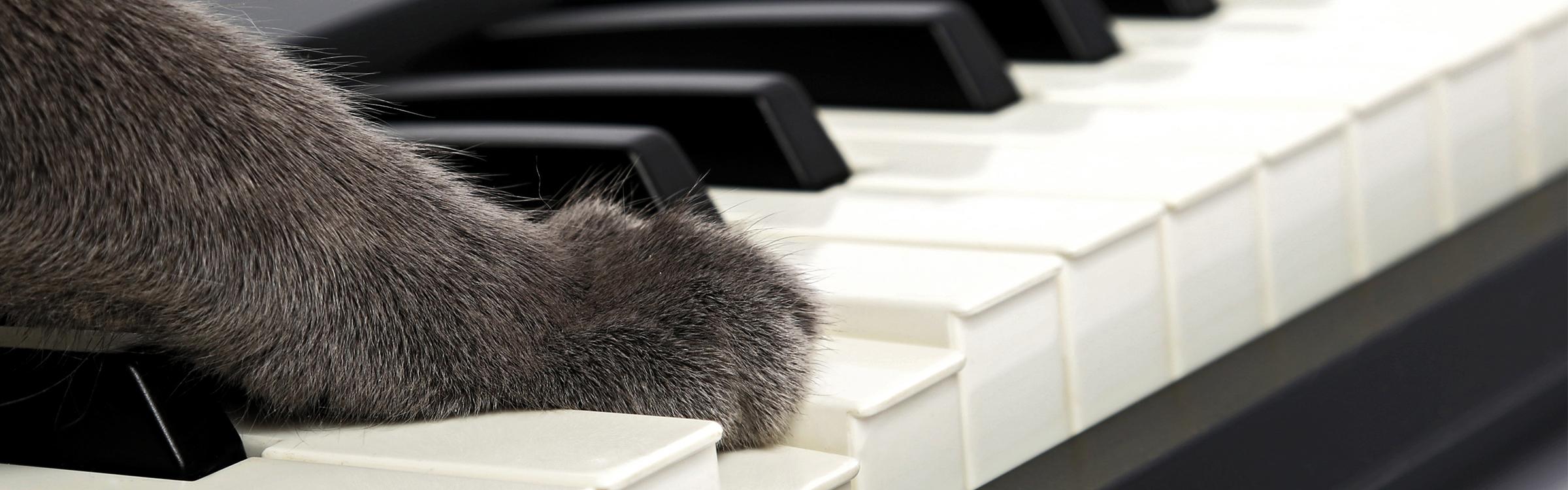 Kattenmuziek header